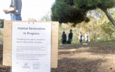 Invasive Species Removed from San Lorenzo Park