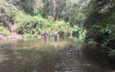 Urban Watch Field Notes: Learning from Local Streams