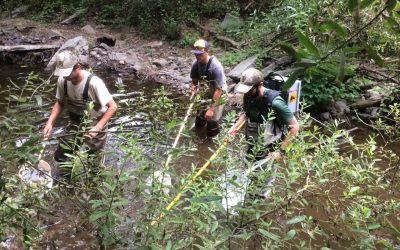 Corralitos Creek Steelhead Rescue