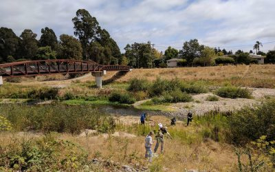 River Health Day volunteers enhance lower San Lorenzo River habitat