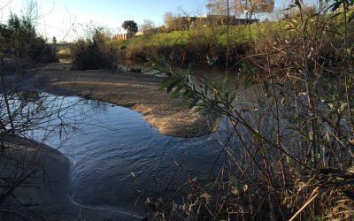Willows: Stewards of the San Lorenzo River