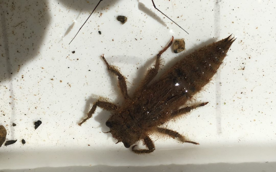 Animal Spotlight: Benthic Macroinvertebrates