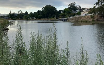 Snapshot Day 2021 Lists San Lorenzo River as Area of Concern